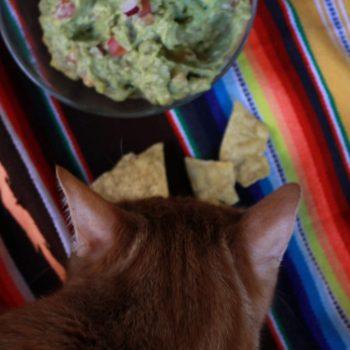 Izzy's Guacamole