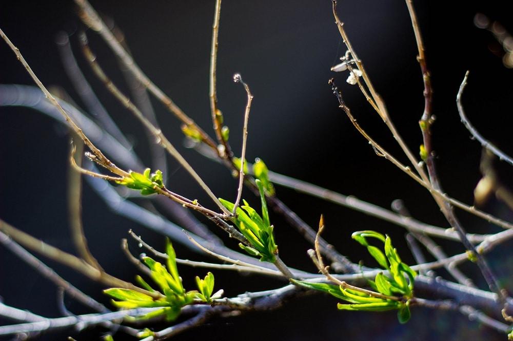 Spring-5173