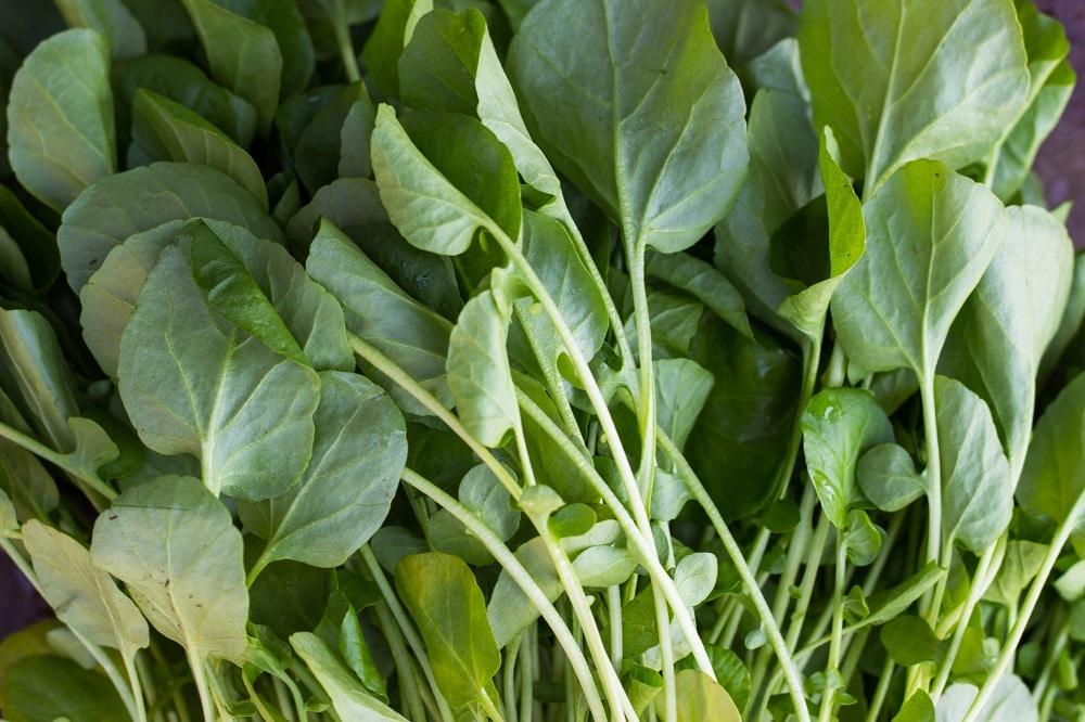 Spring Quinoa Salad-5531