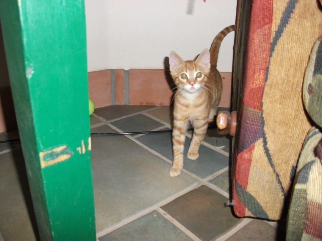 cat 007