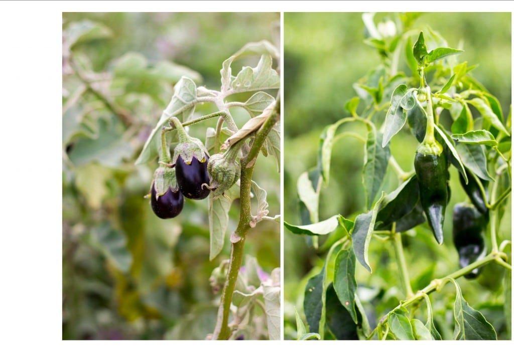 Winery plantspumpkins