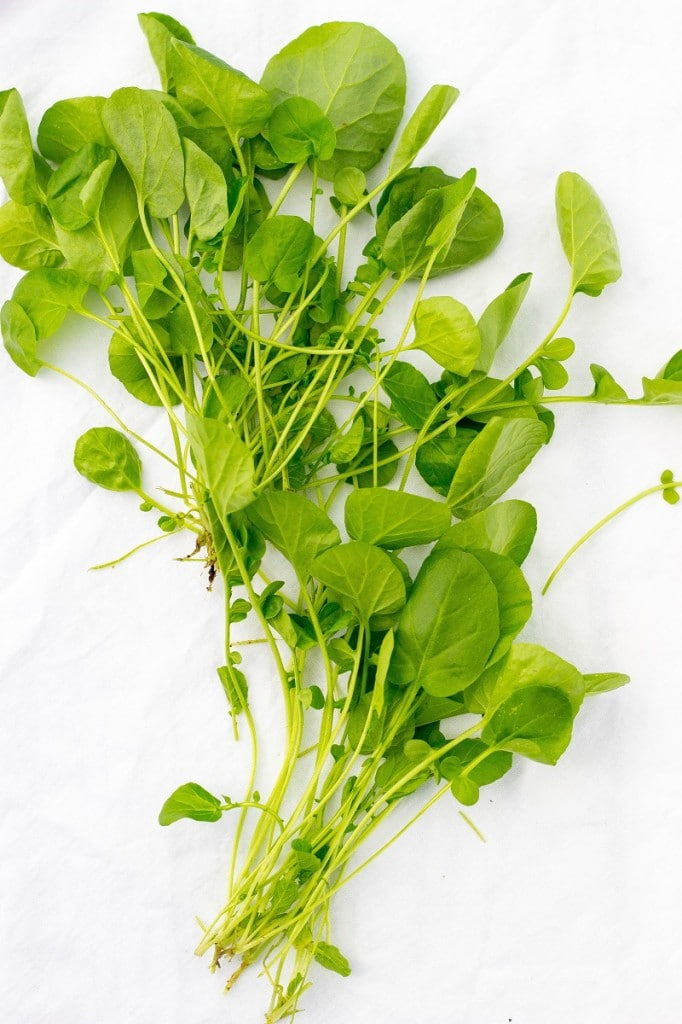 Spring Pasta Salad-1229